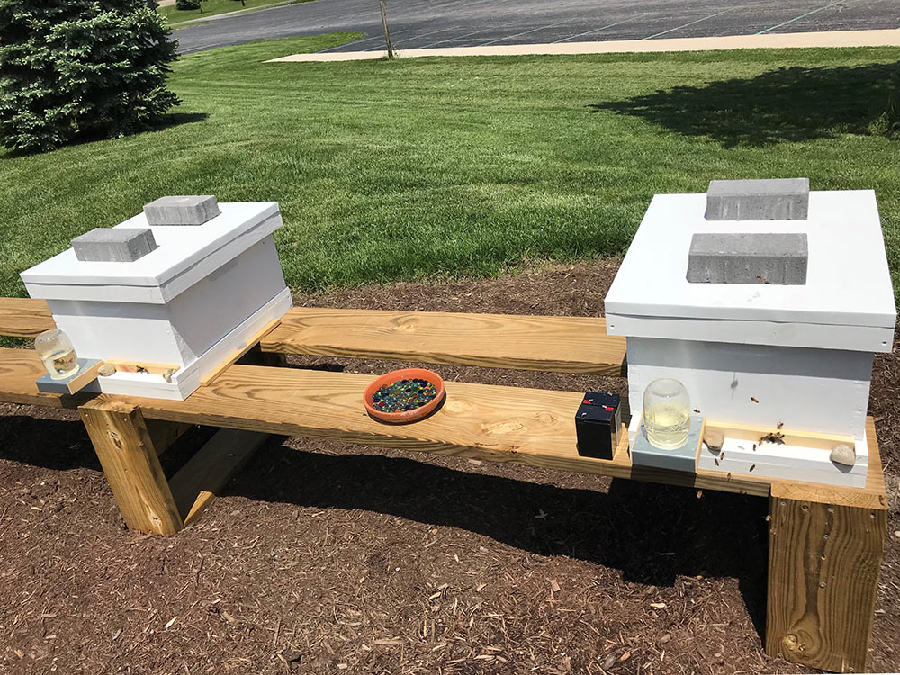 New Bee Hives